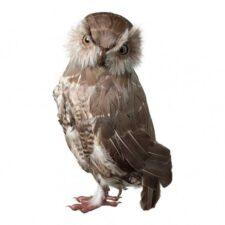 Linnud/loomad
